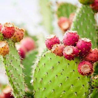 Ingredientes naturales que están reemplazando el plástico