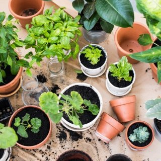 5 hierbas que puedes cultivar en casa y usar en la cocina