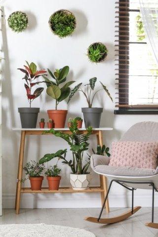 5 plantas para eliminar la humedad en tu hogar