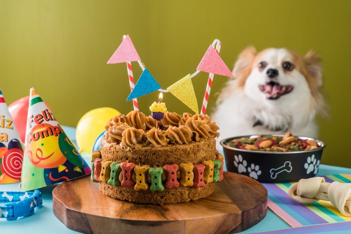 Pastel De Cumpleaños Para Perro
